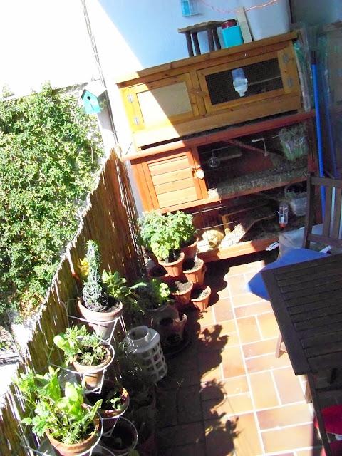 vertikaler Garten, Meerschweine