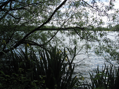 Lake seen through reeds and trees