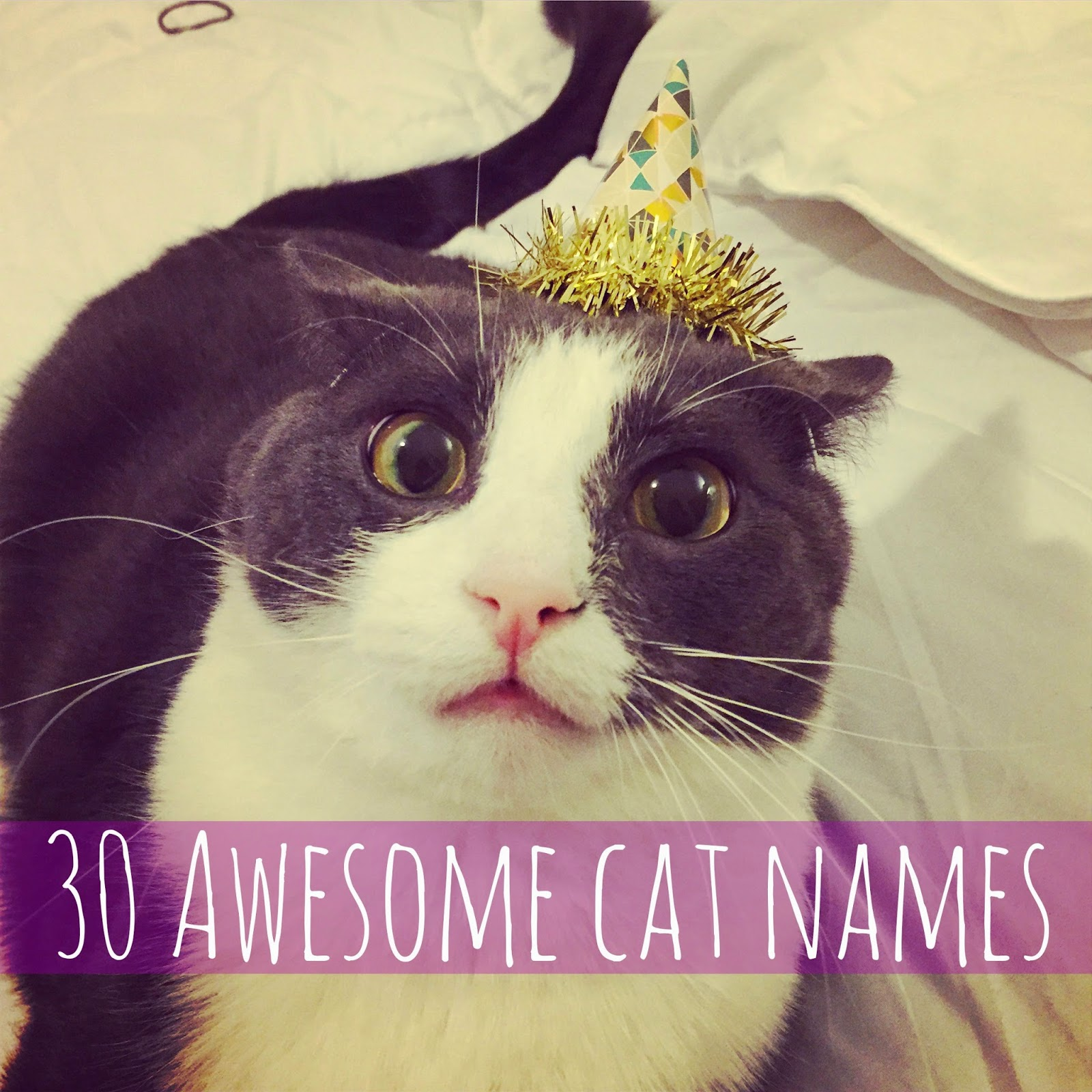 List Of Awesome Cat Names