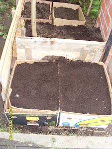 Apumiespalveluina puutarhaan yrttipenkkejä rakennusjätelaudoista ja banaanilaatikoista