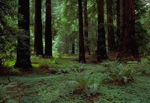 bosque templado Bosques Templados