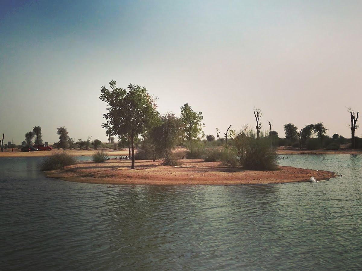 Al qudra a lake in the middle of the desert boy dubai for Public fishing spots near me