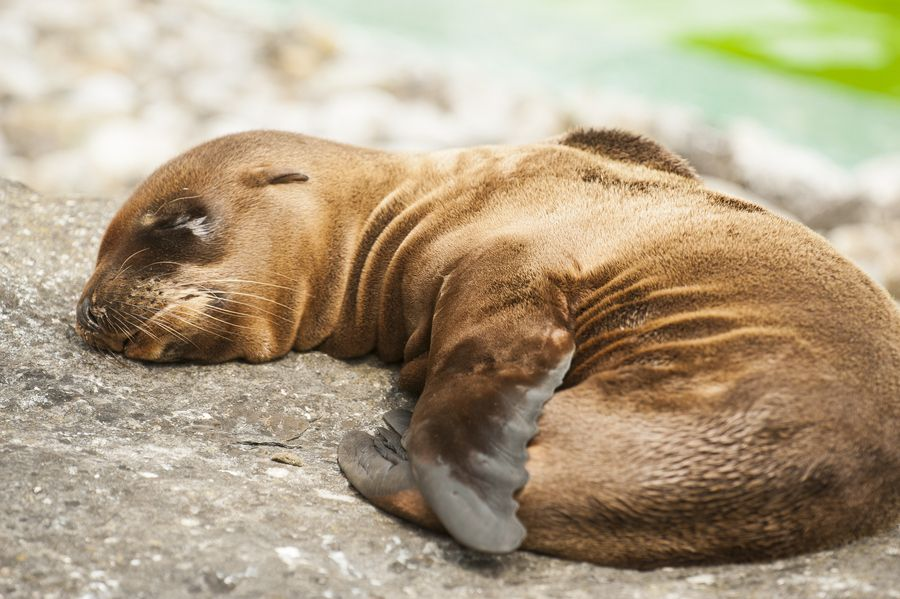 1. Baby Sea lion by Misa Maric