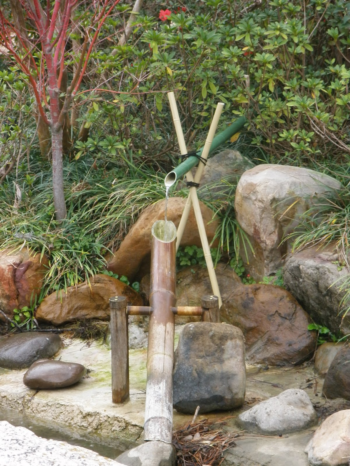 The wonder the weeds and the why in an austin garden for Bamboo water feature