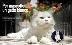 Per mascotte un gatto bianco