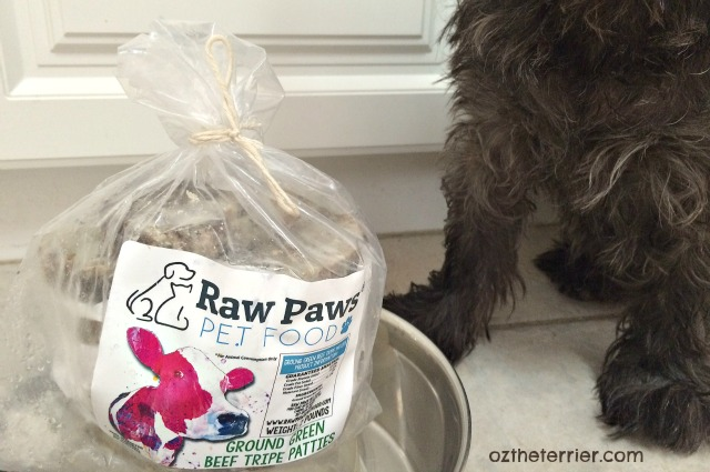 Oz the Terrier and Raw Paws Pet Food Frozen Green Tripe