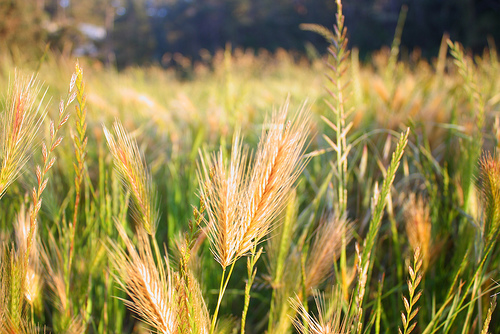 Image result for the wheat and the weeds