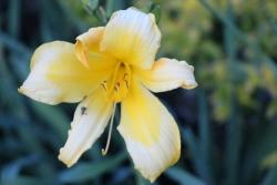 Flor amarela usada para criar 1 clip de vídeo