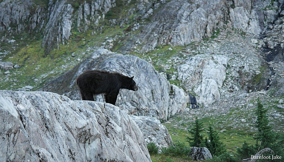 black bear in camp