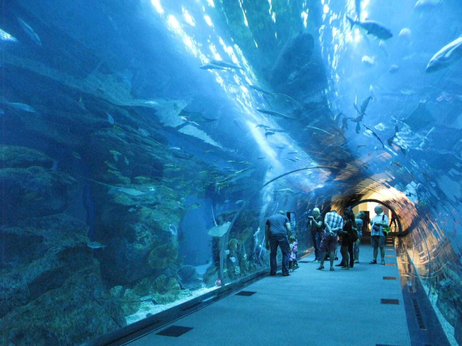 Notes From A Sun Scorched Land Dubai 39 S Indoor Aquarium
