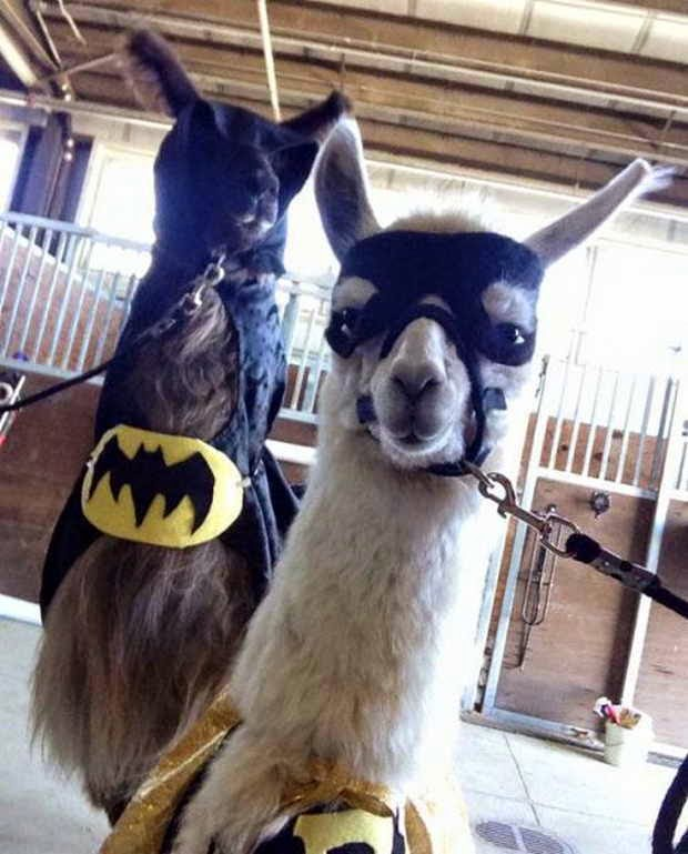 Funny animals of the week, best animal photos, cute animal picture