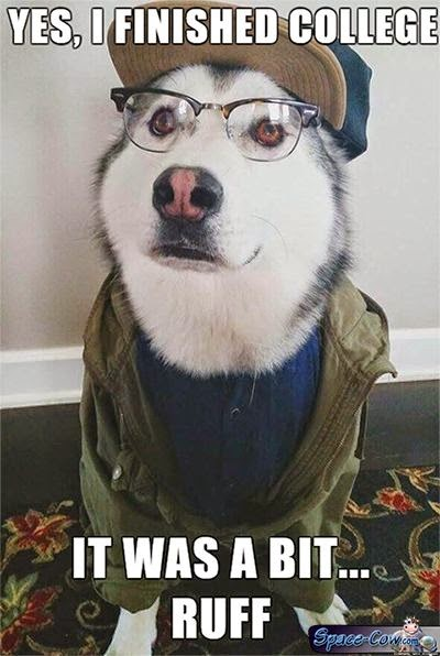 funny husky dog picture