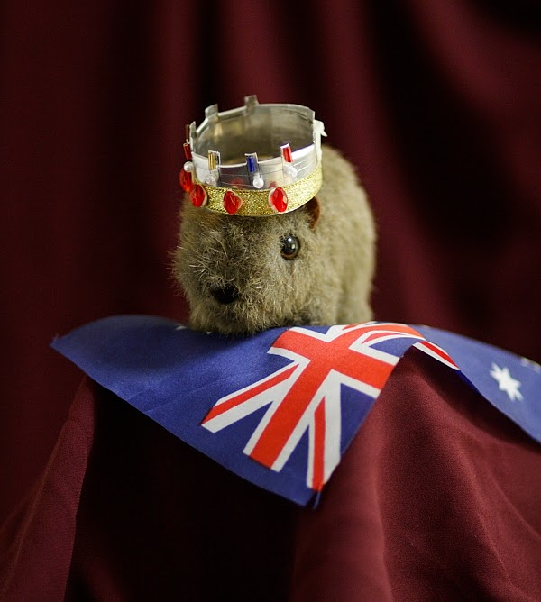 Sir Shane of Wombat