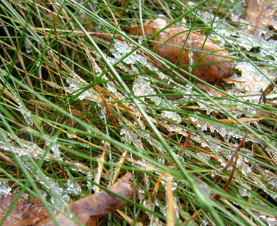frost, иней на траве
