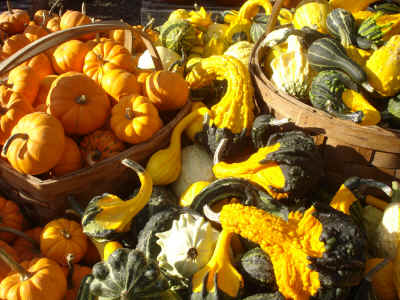 Pumpkins and gourds 1