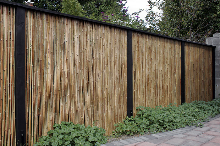 bamboo grove photo bamboo fence. Black Bedroom Furniture Sets. Home Design Ideas