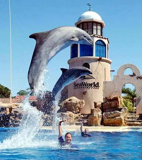 Sea world seaworld san diego california best honeymoon for Honeymoon spots in america