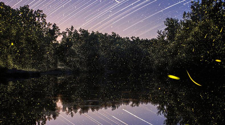 Imagenes de ensueño de senderos luminosos de luciérnagas fotografiados en larga exposición