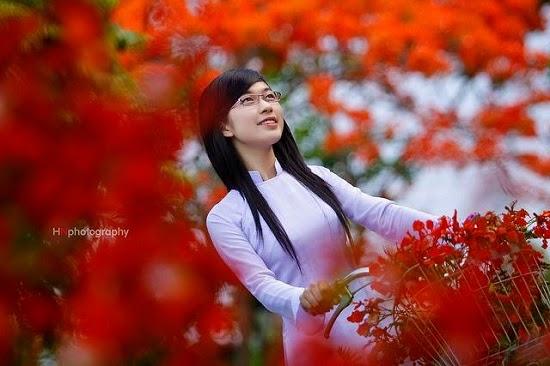 [Image: hoa-phuong-hoc-tro-7.jpg]