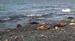Cámara de focas grises