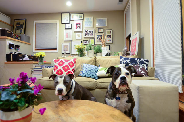 Two Pitties In The City Doggystyle How We Made A 39 Dog Bedroom 39 In An Open Space