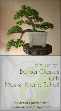 Bonsai Making  in Karachi