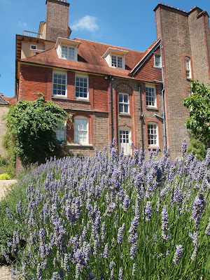 Lavendar bushes at Standen, Sussex