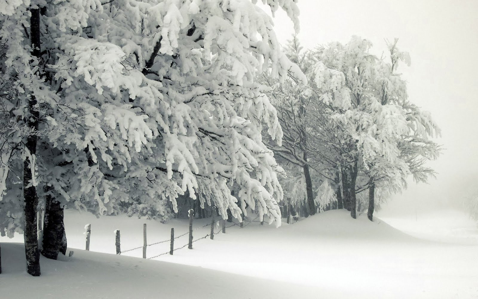 67 Not Out: The Snow That Is Only In The Mind And Our ...