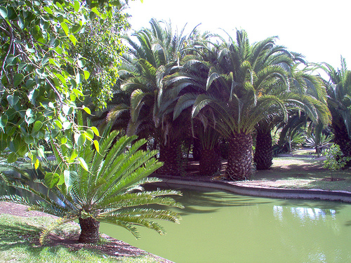 flores tropicais jardim : flores tropicais jardim:Fênix Plantas e Jardins: Estilos: Jardim Tropical.