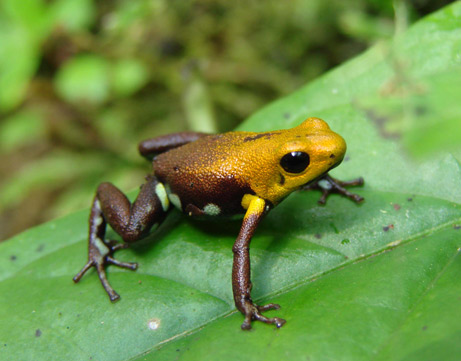 gambar katak comel - gambar katak