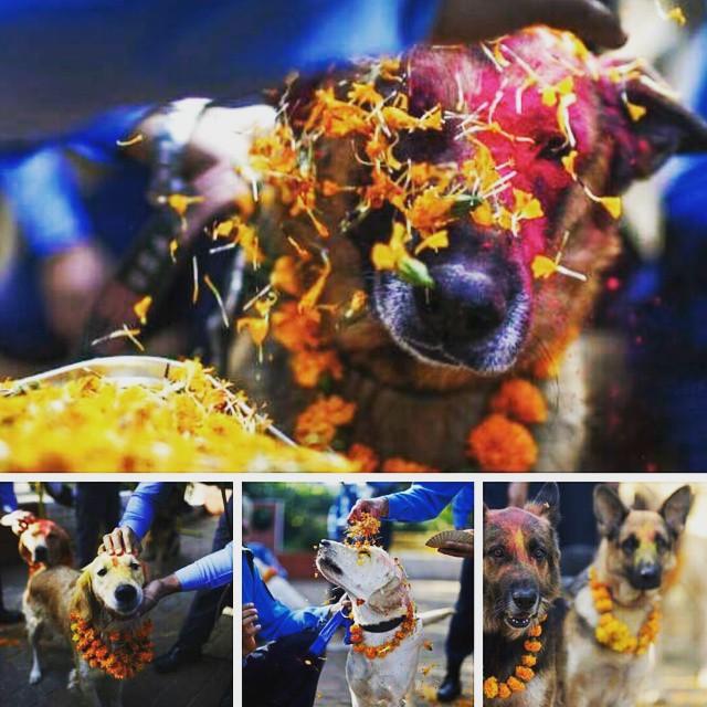 hindus celebram a amizade com o cão