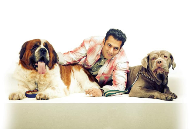 Very Smart Salman Khan HD Wallpaper