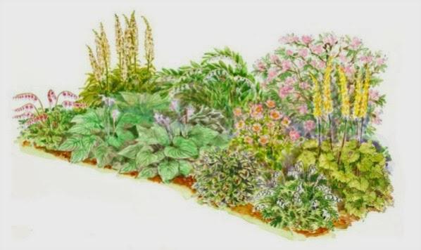 Un arriate para zonas sombr as guia de jardin - Arriate jardin ...