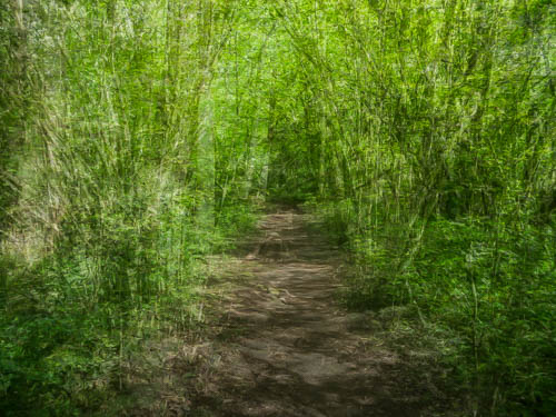 A Walk in the Woods 2  © Graham Dew 2015