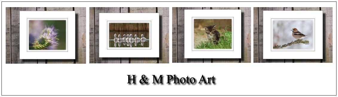 H&M Photo Art