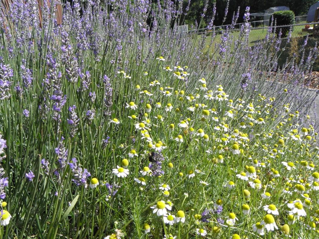 M R Gardens EDIBLE LANDSCAPE DESIGN