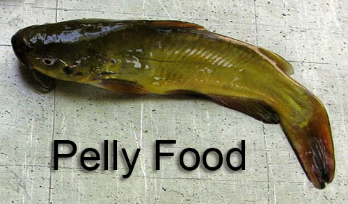Small bullheads for Pelly