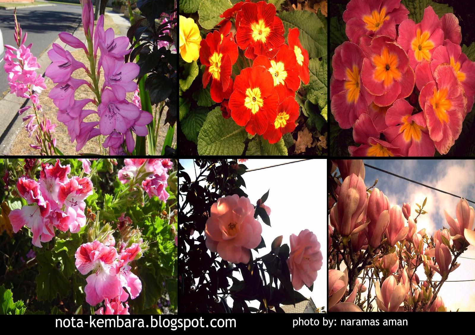Bunga-bunga Australia