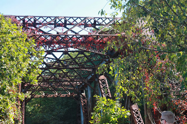 Vine covering steel bridge