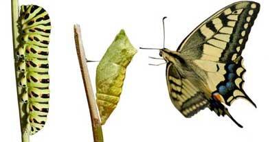 A metamorfose da borboleta bem que poderia acontecer com todos nós que seguimos o Senhor.