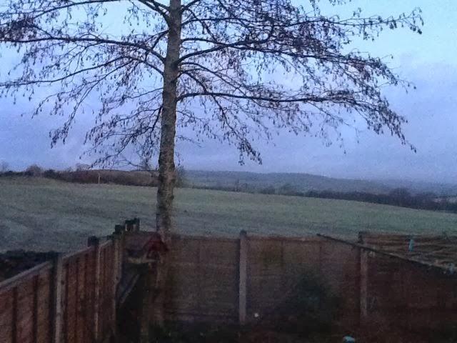 a frosty field