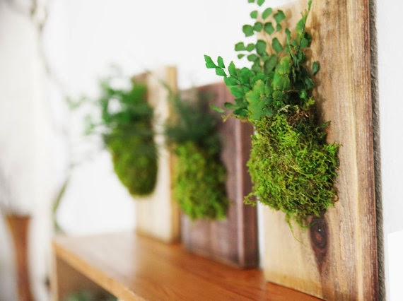 wooden planters for wall, living wall, indoor garden