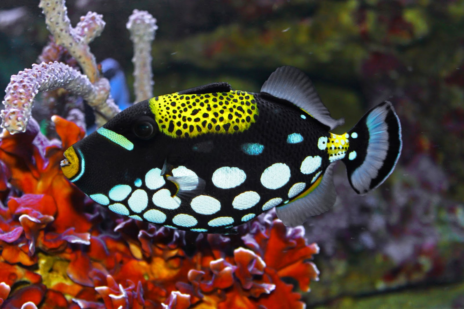 blok888 top 10 most beautiful saltwater fishes in the world