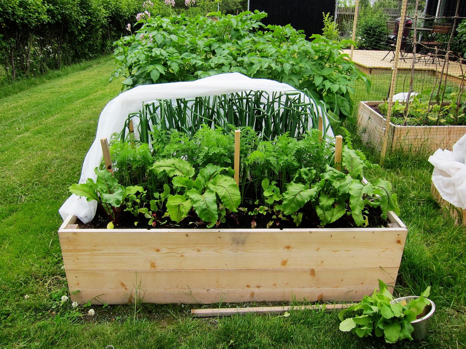 trolles garden 2010 rabatter och odlingsb ddar. Black Bedroom Furniture Sets. Home Design Ideas