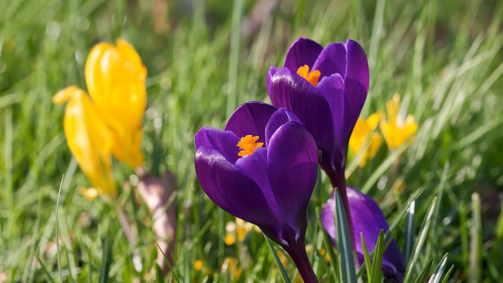 lente achtergronden hd - photo #12