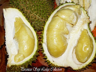 monthong durian
