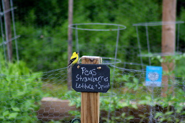 bird decorates garden sign