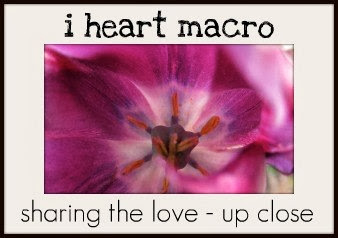 i heart macro ~ Saturday!