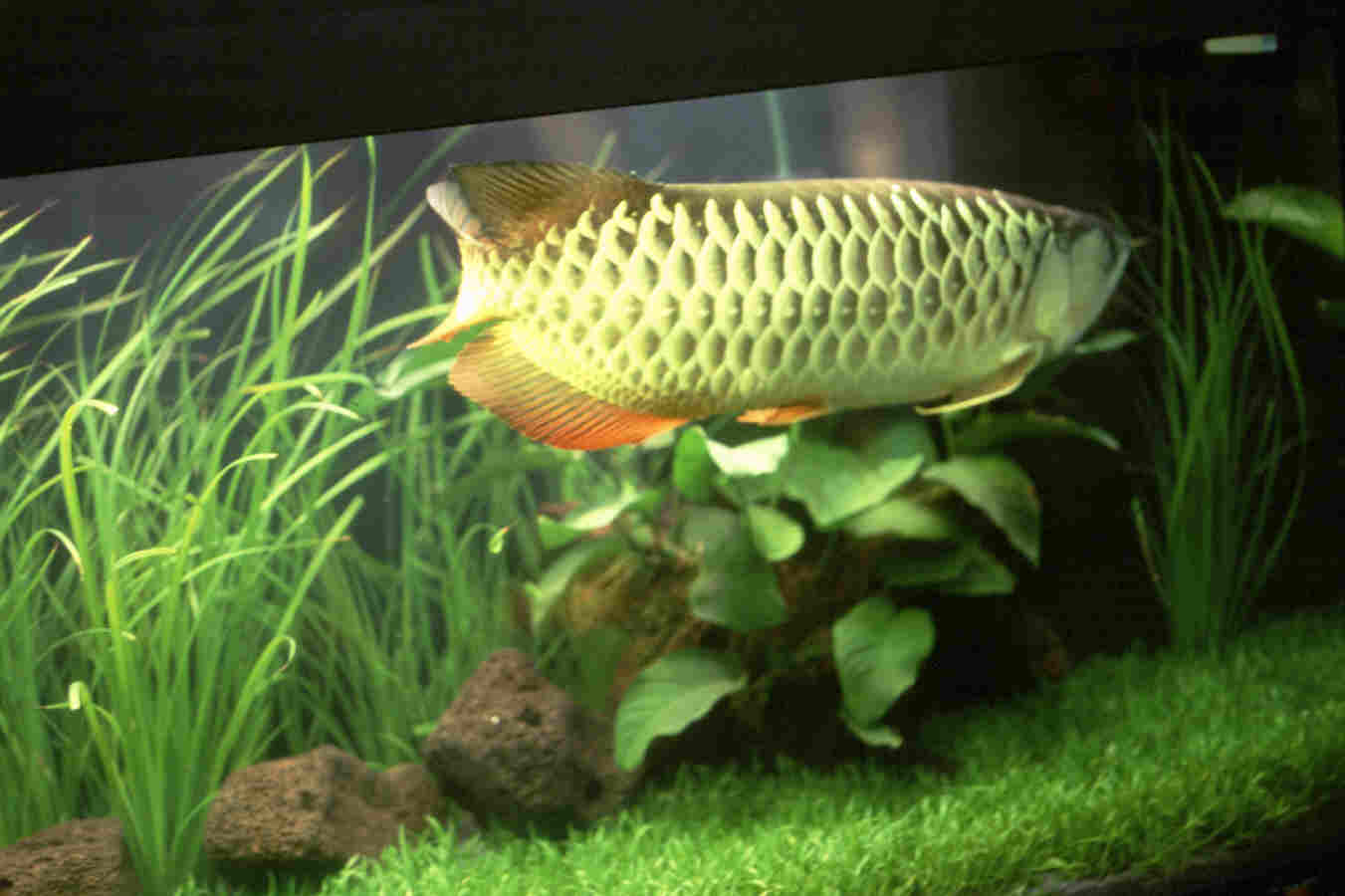 ... ) Rewa Kumar: Fish Aquarium: A Good Remedial Measure for Vastu Defect