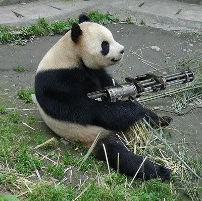 Funny Panda Got Gun